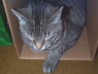 [Carly sleeping in a box]